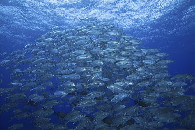 Dein Kunststoff Fischzucht Fischereinetze